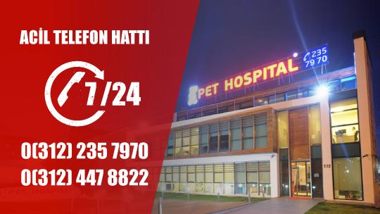 pet-hospital-01